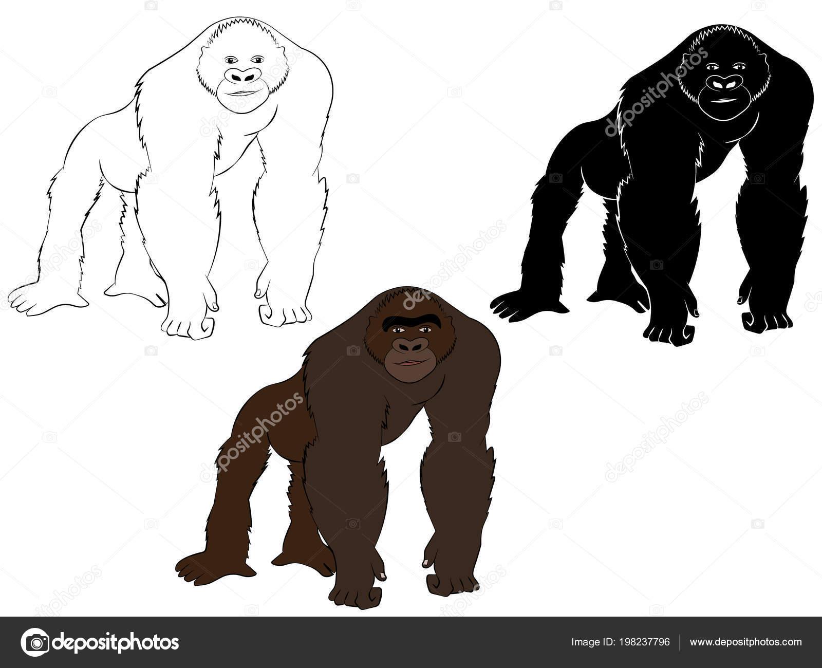 Bir Goril çizim çizilmiş Renkli Siyah Beyaz Anahat Boyama Kitabı