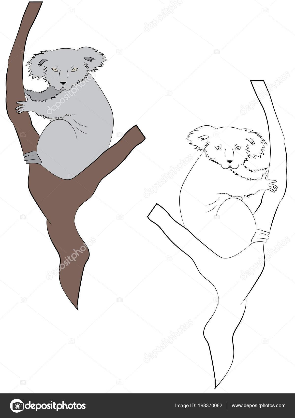 Colored Outline Hand Drawn Drawing Koala Bear Illustrations Kids