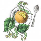Lindenový čaj s citrónem zdobený lískovou větví. Ručně kreslené ilustrace stylu rytí.