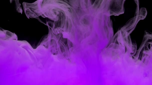 Colorful violet ink mixing in water, swirling softly underwater on black background with copy space. Colored acrylic cloud of paint isolated. Abstract smoke explosion animation.