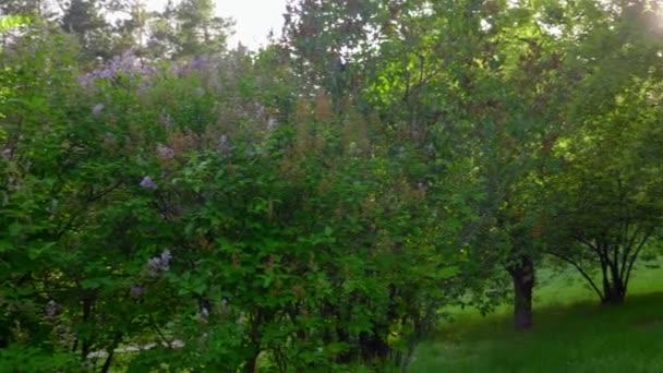 Panoramablick rechts grüne Bäume mit Blumen, Pflanzen, Gras im Garten oder Park