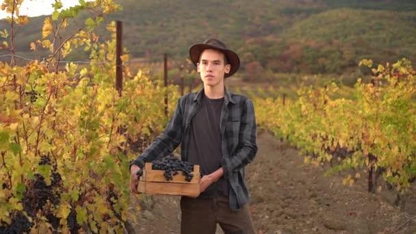 Portrét mladého šťastného farmáře držícího na podzimní vinici krabici hroznů. Sklizeň vína Tour. Období sklizně. Venkovský životní styl
