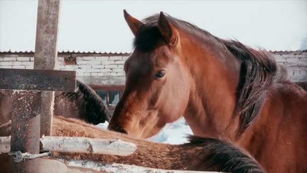 Szomorú ló áll állományban