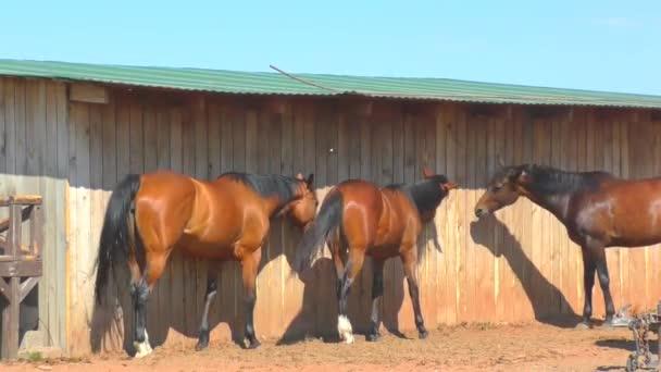 Koně na farmě brzy na jaře