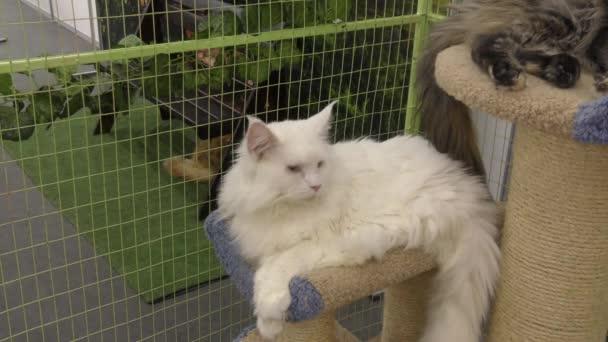 Koťat plodí bílou barvu