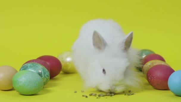 Boldog húsvéti nyuszi a sárga háttérrel a színes tojásokat