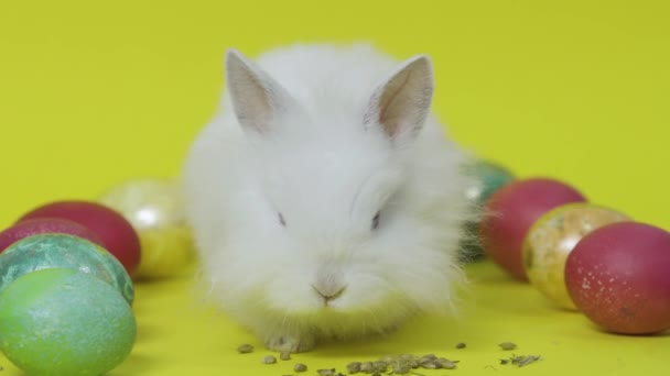 Easter bunny on yellow background with colored eggs