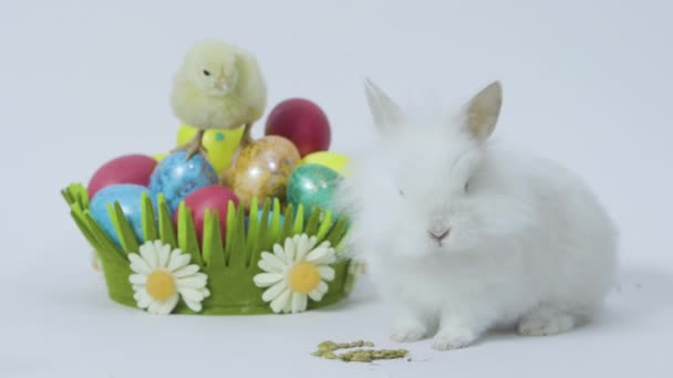 Easter bunny and chick with colored eggs on white background