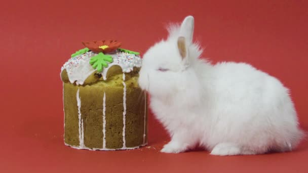 Easter Bunny eats cake on red background