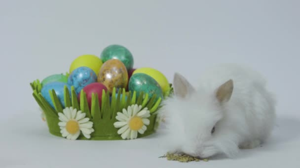 Happy Easter bunny on white background with colored eggs in nest
