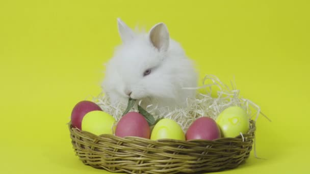 Easter bunny sitting on nest with colored eggs on yellow background