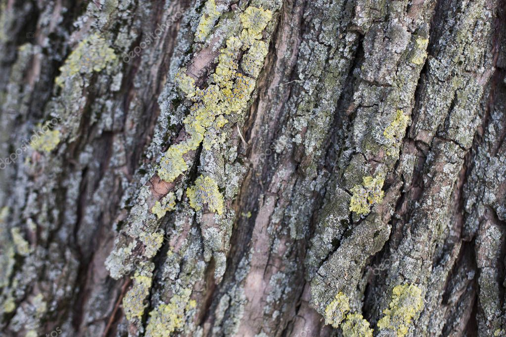 tree trunk with moss pattern texture background