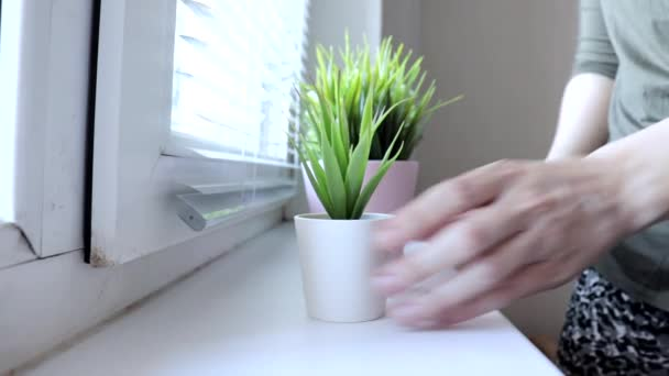 Woman putting decorative green plants in flower pots on a window sill, caring for plants andcreating comfort