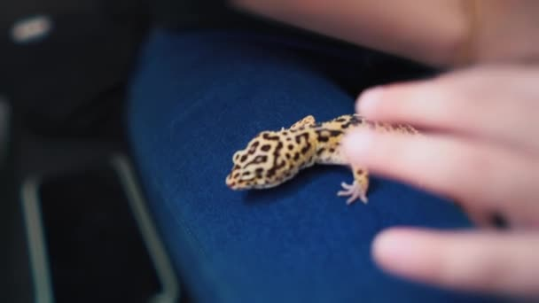 A small gecko crawls on the foot of a young girl, exotic pet, lizard