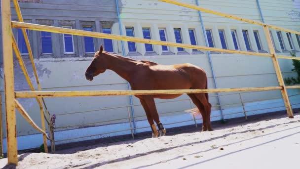 Krásný červený kůň stojí v paddocku venku, oříškového hřebečka