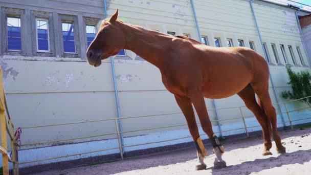 A beautiful red horse stands in the paddock outside, a chestnut stallion