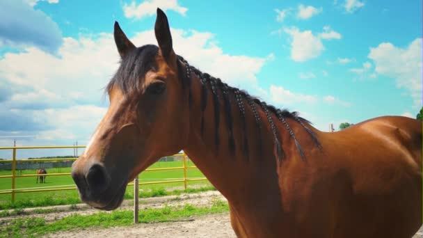 Krásná hnědka s hřívou pletené copánky, portrét koně