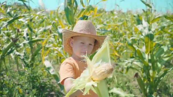 A boy in a straw hat is playing in a cornfield, the child is holding corn cobs and presents himself as a cowboy