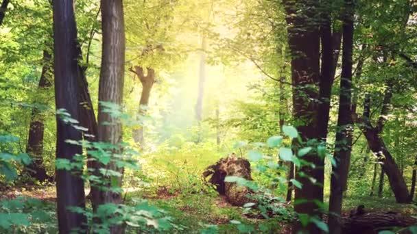 Okos napfény teszi az utat a zöld lomb, egy erdős táj, egy mágikus erdő vastag ágakat