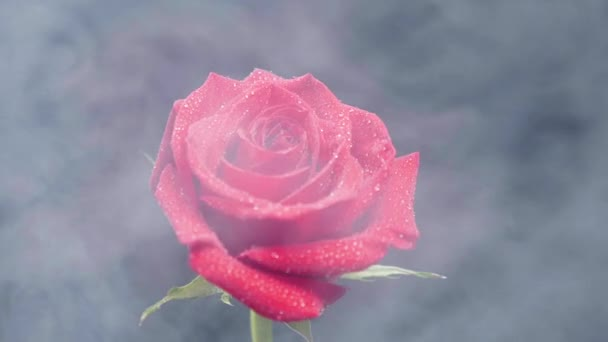 White smoke floating around a red rose covered with water drops