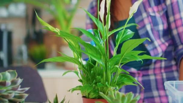 Detailní záběr na stříkající pokojovou rostlinu