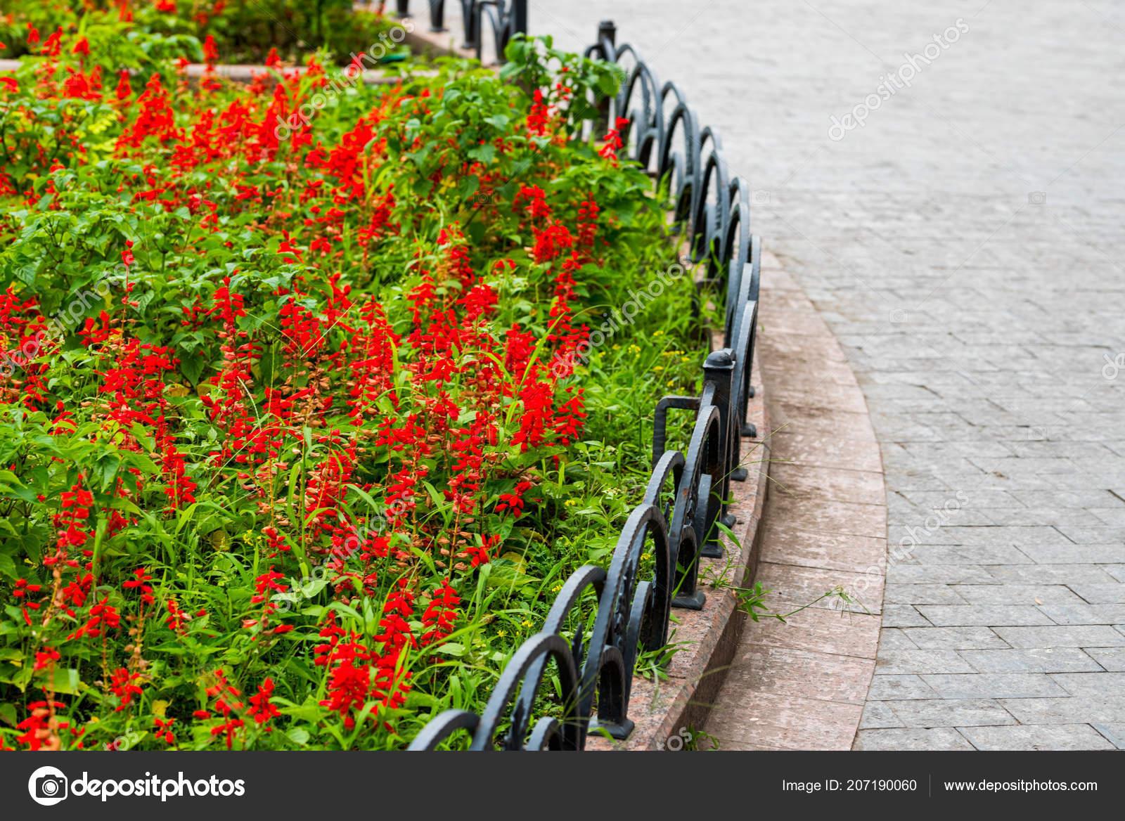 Image De Parterre De Fleurs parterre de fleurs dans le paysage — photographie posonsky