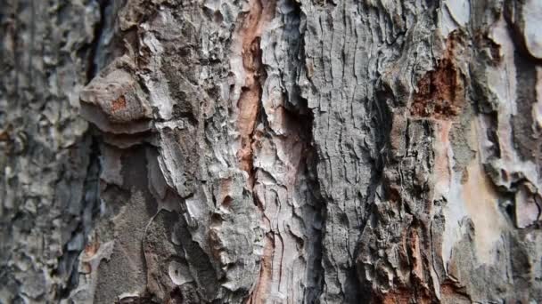 mravenci na stromě