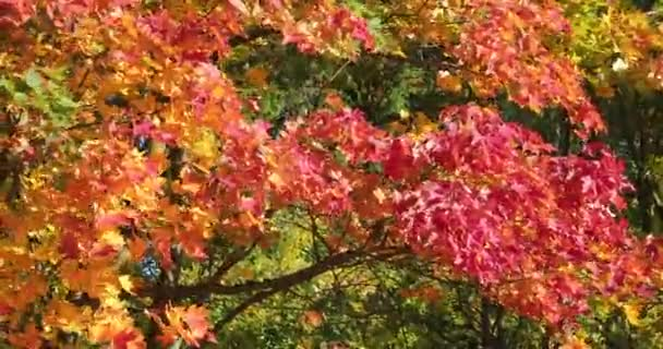 bright and colorful leaves on tree branches in autumn time