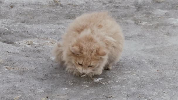 red stray cats outside in winter