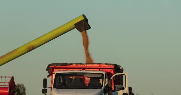 sklírač pracuje a uvolní obilí v těle náklaďáku ve dne