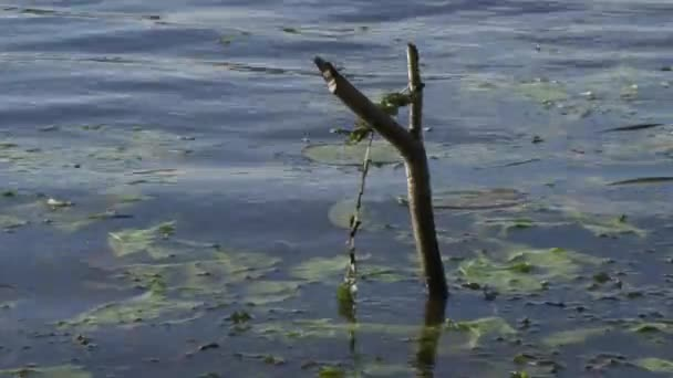 wooden ratchet sticks out from under the water is used as a support for a fishing rod