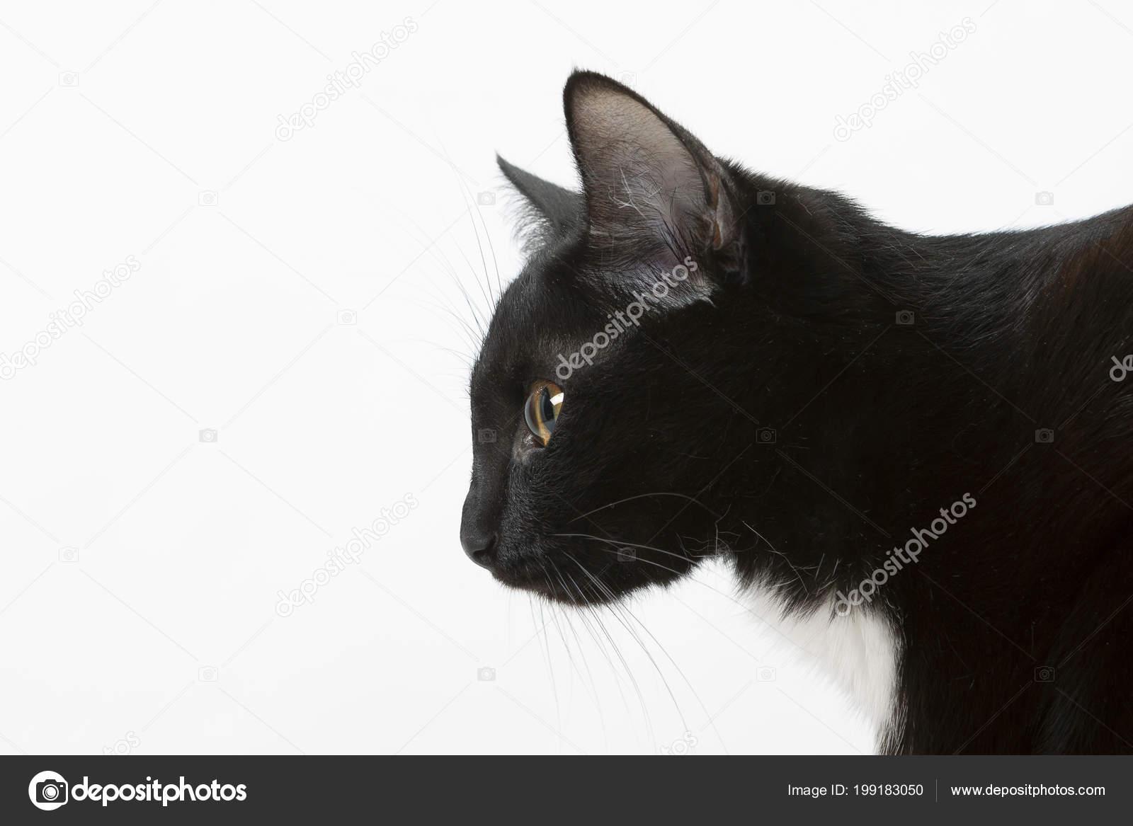 Όμορφες μαύρες εικόνες μουνί