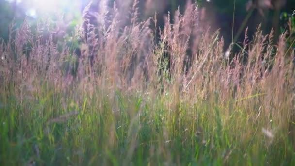 Odlesk slunce na kvetoucí trávy