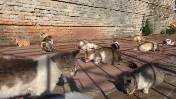 Gruppe obdachloser Stadtkatzen auf dem Betonboden, die von jemandem mitgebrachtes Trockenfutter essen