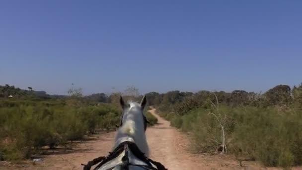 Fehér ló rajz egy kocsi földúton afrikai táj, Kilátás kocsi vezetőülés