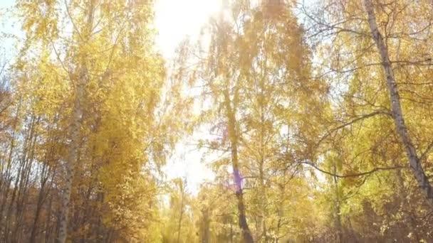Žlutý strom listí proti modré obloze
