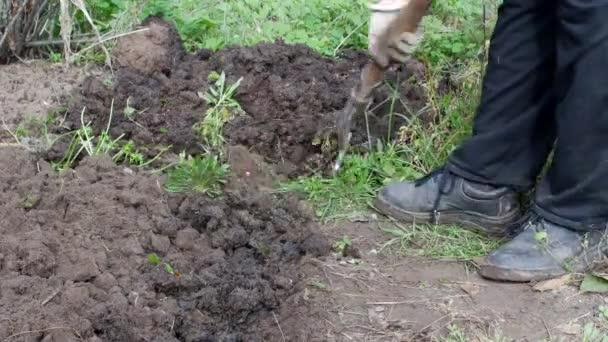 Žena se zaboří půdu v zahradě, zahrada, close-up, venkovní
