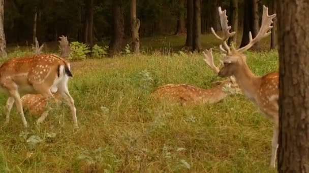 Beautiful wild animal spotted deer with horns on the background of nature, japanese deer, dappled