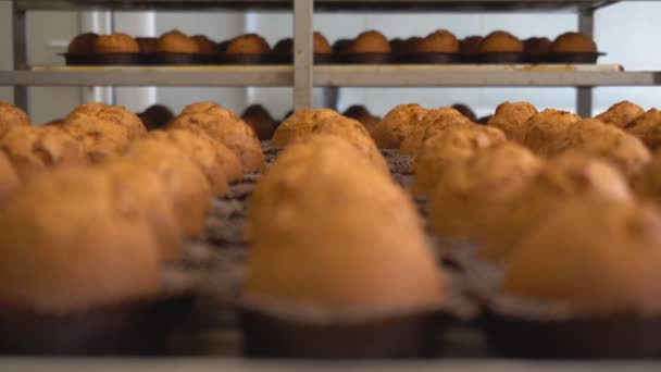 Tray of freshly baked chocolate muffins from biscuit dough, production of muffins. Food Industry Background, cooking, focus