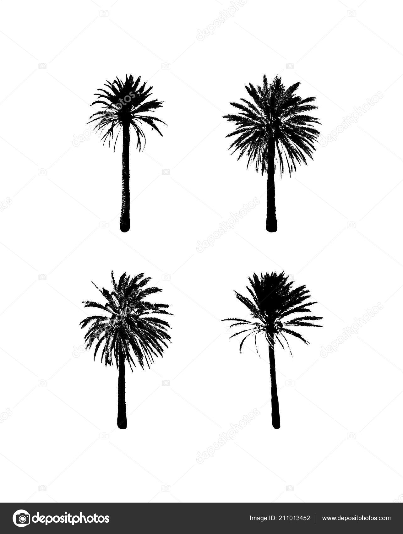 Tropical Palm Tree Exotic Summer Fashion Design Travel And