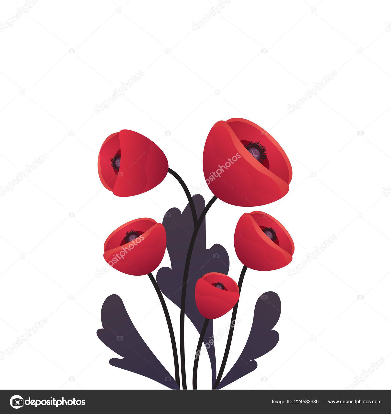 Realistic Red Poppy Flower Branch International Symbol Of Peace