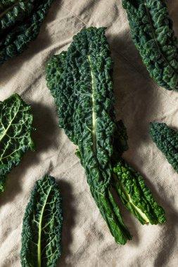 Raw Green Organic Tuscan Dinosaur Kale in a Bunch