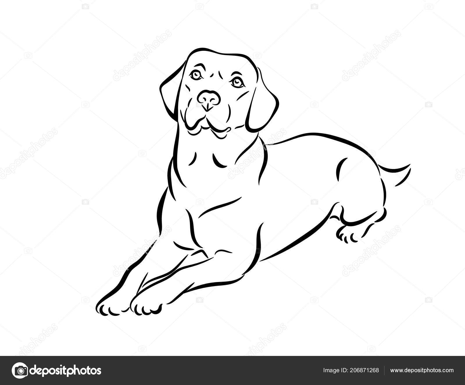 Ilustración Trama Del Labrador Contorno Blanco Negro Mentira