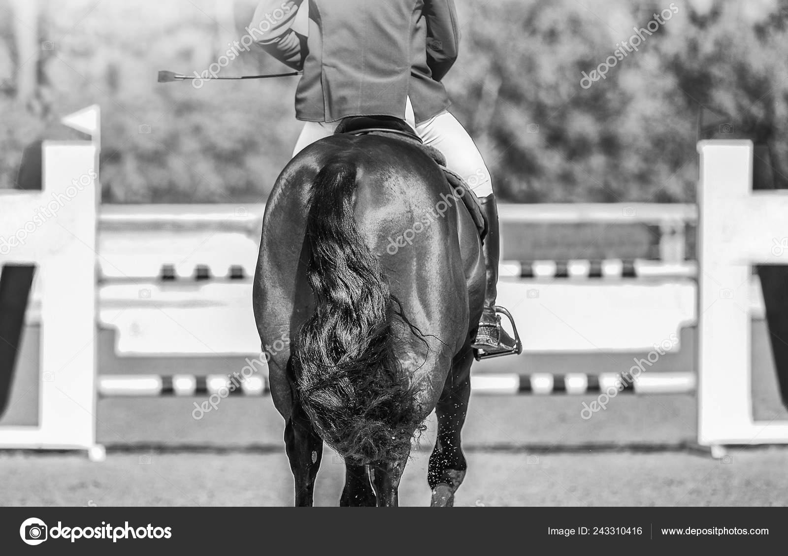 Horse Horizontal Black White Banner Website Header Poster Wallpaper Monochrome Stock Photo C Martanovak 243310416