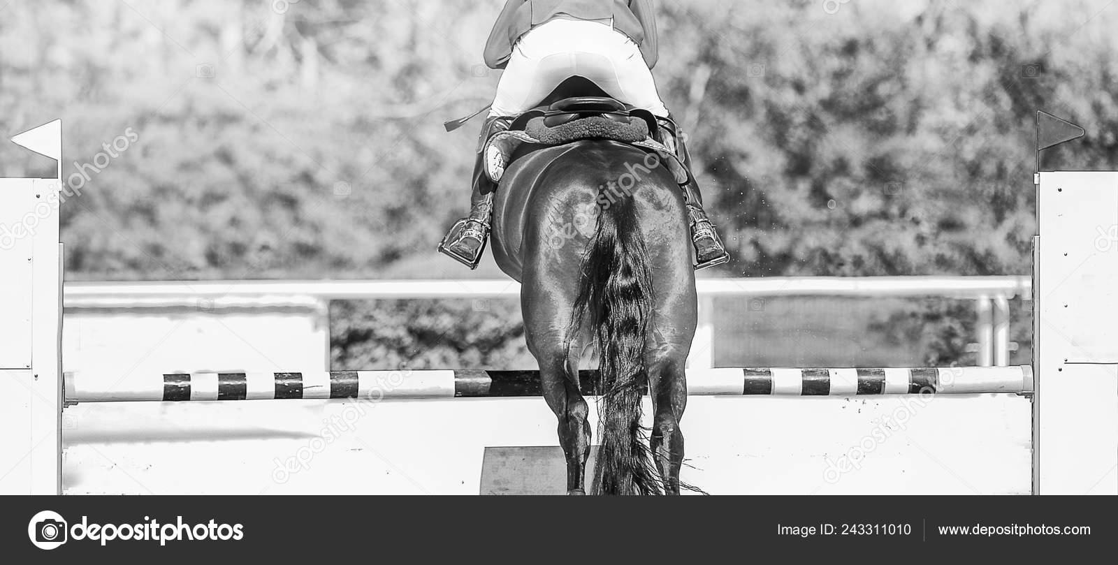 Horse Horizontal Black White Banner Website Header Poster Wallpaper Monochrome Stock Photo C Martanovak 243311010