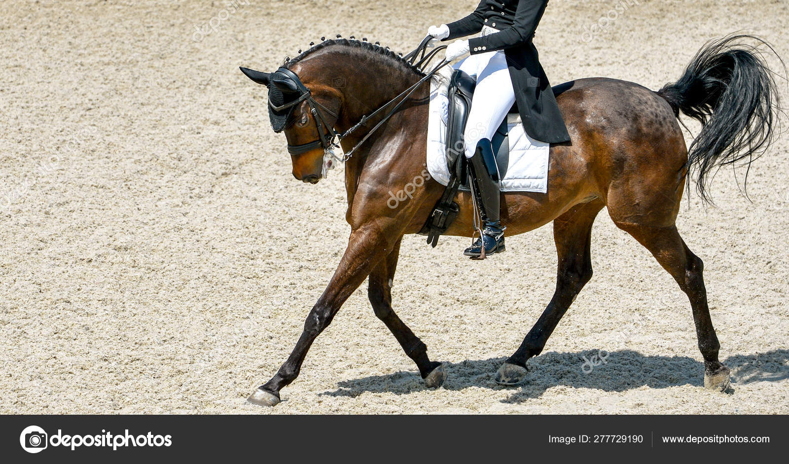Dressage Horse Rider Black Uniform Beautiful Horse Portrait Equestrian Sport Stock Photo C Martanovak 277729190