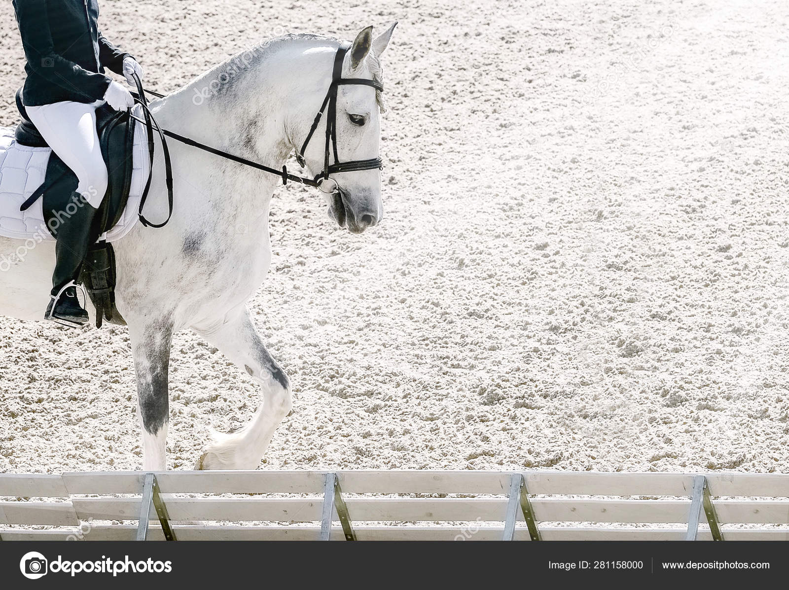 Dressage Horse Rider Black Uniform Beautiful White Horse Portrait Equestrian Stock Photo C Martanovak 281158000