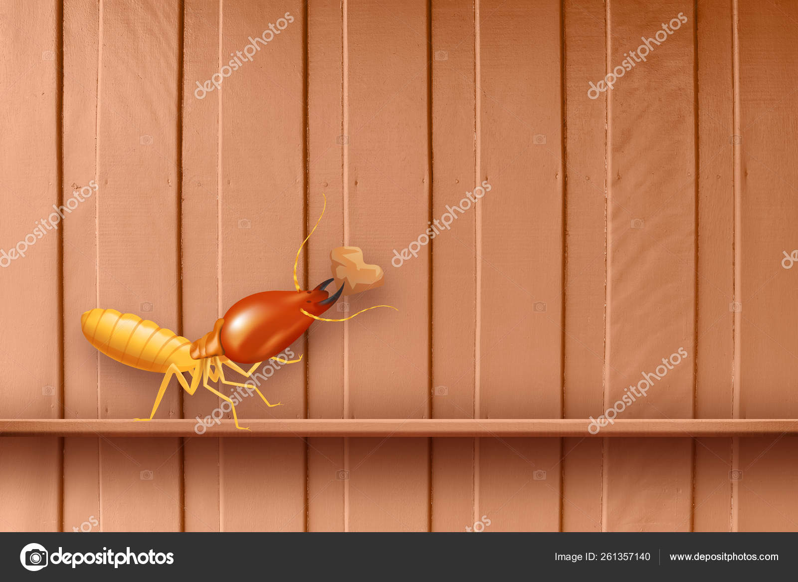 Termite Termites At Wooden Wall Termites And Wood Decay Texture Wood With Nest Termite Or White Ant Background Damaged With Wooden Eaten By Termite Or White Ants Stock Photo C Cgdeaw 261357140
