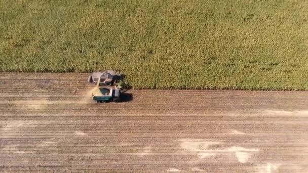 Kukorica betakarítása géppel a légi felülről lefelé shot ősszel