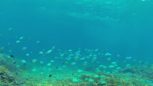 Škola plavání malých stříbrných ryb elegantně pod Blue Ocean, Bali